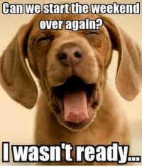 Memes, Happy, and The Weekend: Can we start the weekend  over again?  Iwasn't ready Happy Monday! *wags tail and licks screen*