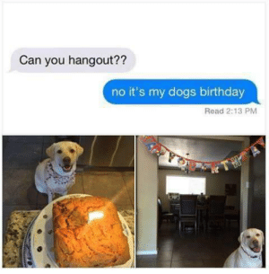 233236:  LITERALLY ME : Can you hangout??  no it's my dogs birthday  Read 2:13 PM 233236:  LITERALLY ME