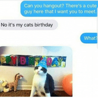 Birthday, Cats, and Cute: Can you hangout? There's a cute  guy here that I want you to meet.  No it's my cats birthday  What  04 Yess 😊🐱🎂😂 🔥 Follow Us 👉 @latinoswithattitude 🔥 latinosbelike latinasbelike latinoproblems mexicansbelike mexican mexicanproblems hispanicsbelike hispanic hispanicproblems latina latinas latino latinos hispanicsbelike