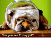 Can you see Friday yet? Happy Friday Eve!