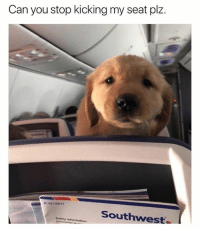 Memes, Information, and Southwest: Can you stop kicking my seat plz.  -551-08117  Southwest  Safety information It's gonna be a ruff ride