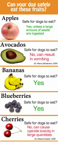 <p>Fruits Vs. Dogs.</p>: Can your dog safely  eat these fruits?  Apples  gafe for dogs to eat?  Yes, unless a large  amount of seeds  are ingested  Avocados  Safe for dogs to eat?  No, can resulit  in vomiting  -Dr. Sherry Sanderson, DVM  Bananas  Safe for dogs to eat?  Yes  Blueberries  Safe for dogs to eat?  Yes  Cherries  Safe for dogs to eat?  No, can cause  cyanide toxicity in  large quantities  -Dr. Edward Cooper, VMD <p>Fruits Vs. Dogs.</p>