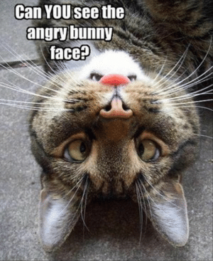 Lol, Image, and Angry: Can YOUsee the  angry bunny  face? Angry bunny face...:-. I didn't see it at first, then suddenly the Image popped out at me. LOL