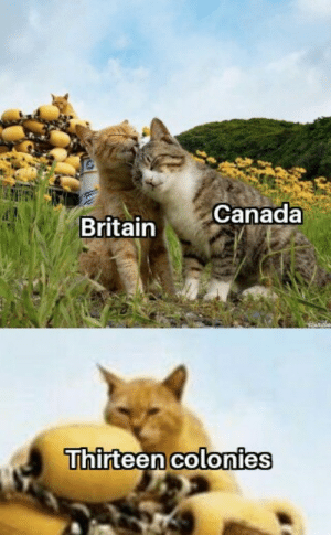 Thirteen colonies planning something: Canada  Britain  Thirteen colonies Thirteen colonies planning something