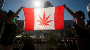 Canada is set to become the first G7 nation to legalize marijuana: Canada is set to become the first G7 nation to legalize marijuana