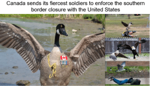 Canada sends its top fighting force to southern border: Canada sends its top fighting force to southern border