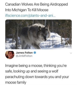 Dank, Family, and Memes: Canadian Wolves Are Being Airdropped  Into Michigan To Kill Moose  iflscience.com/plants-and-ani..  James Felton  @JimMFelton  Imagine being a moose, thinking you're  safe, looking up and seeing a wolf  parachuting down towards you and your  moose family Helen grab the kids. We gotta go. by sadie609 MORE MEMES