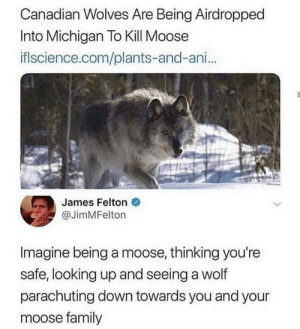 Damage control: Canadian Wolves Are Being Airdropped  Into Michigan To Kill Moose  iflscience.com/plants-and-ani...  James Felton  @JimMFelton  Imagine being a moose, thinking you're  safe, looking up and seeing a wolf  parachuting down towards you and your  moose family Damage control