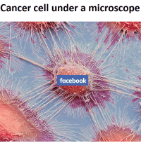 "Dank, Facebook, and Meme: Cancer cell under a microscope  facebook <p>Thoughts and prayers via /r/dank_meme <a href=""http://ift.tt/2IL3FgP"">http://ift.tt/2IL3FgP</a></p>"