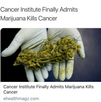 Memes, Cancer, and Marijuana: Cancer Institute Finally Admits  Marijuana Kills Cancer  Cancer Institute Finally Admits Marijuana Kills  Cancer  ehealthmagz.com Thoughts🤔 @ratchethoodvideos