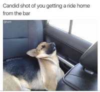 "Memes, Taco Bell, and Home: Candid shot of you getting a ride home  from the bar  @bark ""Wait can we stop at Taco Bell I'm literally famished."" literallythatsyou"