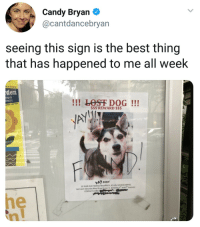 Candy, Facebook, and Lost: Candy Bryan  @cantdancebryan  seeing this sign is the best thing  that has happened to me all week  et on Facebook  den  ny s  en!!!  !!! LOST DOG!!!  Land Trust  S$$ REWARD $$$  2-YEAR OLD FEMALE  1 MIX BREED, 42 LBS, MICROCHIPPED  Last seen Saturday May 26 on Union St. between 5t and 6 Avenues  CONTACT CHRIS <p>̶L̶o̶s̶t̶ Dog!</p>