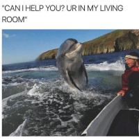 """Funny, Help, and Living: """"CANI HELP YOU? UR IN MY LIVING  ROOM""""  2"""