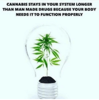 Memes, 🤖, and Function: CANNABIS STAYS IN YOUR SYSTEM LONGER  THAN MAN MADE DRUGS BECAUSE YOUR BODY  NEEDS ITTO FUNCTION PROPERLY