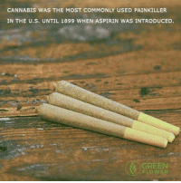 Memes, Common, and Cannabis: CANNABIS WAS THE MOST COMMONLY USED PAINKILLER  IN THE U.S. UNTIL 1899 WHEN ASPIRIN WAS INTRODUCED.  GREEN