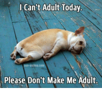 Cant Adult: Can't Adult Today  Sun-gazing.com  Please Don't Make Me Adult