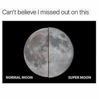 Bae, Funny, and Meme: Can't believe I missed out on this  NORMAL MOON  SUPER MOON (@friend_of_bae )