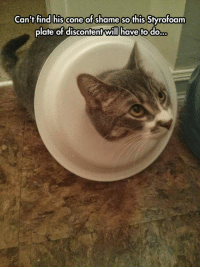 Shame, Can, and Will: Can't find his cone of shame so this Styrofoam  plate of discontent will have to do <p>When You Just Can't Find The Cone Of Shame.</p>