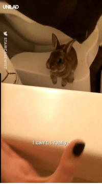 "Dank, join.me, and 🤖: can't, I really ""Took a bath and this little guy kept trying to join me"" 😂🐰"