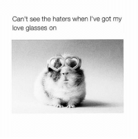 Love, Memes, and Free: Can't see the haters when I've got my  love glasses on Let them judge you. Let them misunderstand you. Let them gossip about you. Their opinions aren't your problems. You stay kind, committed to love and free in your authenticity. No matter what they do or say, don't you doubt your worth or the beauty of your truth. Just keep shining like you always do. — Scott Stabile 💜🌻😍😇 beyourself behappy perspective dowhatmakesyouhappy letgo shine goodvibes awakespiritual