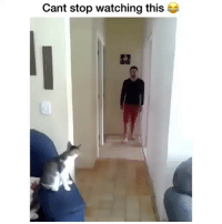 Funny, You, and Backup: Cant stop watching this Me when you follow my backup @ifunnymeme.tv