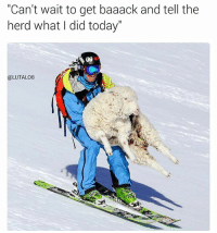 "Sheep literally live up to their name, they just go with the flow and don't give a shit 😂: ""Can't wait to get baaack and tell the  herd what I did today  (a LUTALO8 Sheep literally live up to their name, they just go with the flow and don't give a shit 😂"