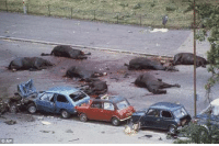 Horses, Lay's, and Memes: CAP THIS IMAGE MAY DISTURB MANY PEOPLE... However this is the aftermath of an IRA bombing in Hyde Park London. 7 dead Army horses lay on the ground.. the bodies of 11 Soldiers have been taken away... 2 former Paratroopers(now 65 and 67) have been arrested for the killing of A KNOWN IRA MAN (doing the job they were sent to do by our government of the time, some 45 yrs ago) they are now calling it murder..... HOWEVER THE PERSON OR PERSONS responsible for this bombing and any other IRA killing will never be brought to justice because TONY BLAIR signed an agreement to say no charges will be brought against any IRA suspect, this was done as a brokering of peace in Ireland... its time to stand up and say enough is enough...... SUPPORT OUR TROOPS