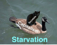 Memes, 🤖, and Starvation: Capitalis  Starvation