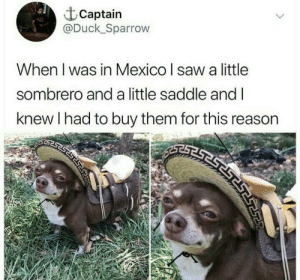 Thats cute.: Captain  @Duck_Sparrow  When I was in Mexico I saw a little  sombrero and a little saddle and I  knew I had to buy them for this reason Thats cute.