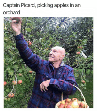 Orchard, pronounced like Picard: Captain Picard, picking apples in an  orchard Orchard, pronounced like Picard