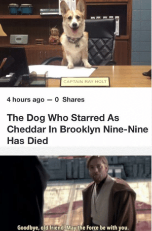 RIP MY FRIEND:(: CAPTAIN RAY HOLT  4 hours ago 0 Shares  The Dog Who Starred As  Cheddar In Brooklyn Nine-Nine  Has Died  Goodbye, old friend, May the Force be with you. RIP MY FRIEND:(