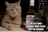 Caption  by Kitty works  But  JIM BEAM n  THE CAT ANDI  BOU  ALREADY HAVE PLANS  FOR THE EVENING Now, we're ready for anything!