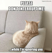 Memes, Captioned, and 🤖: Caption  by Kitty works  PLEASE  INTERRUPT ME!  -while Imignoring you I'm hard to get!