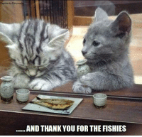 Can we eat yet?: Caption by Kittyvor  AND THANK YOU FOR THE FISHIES Can we eat yet?