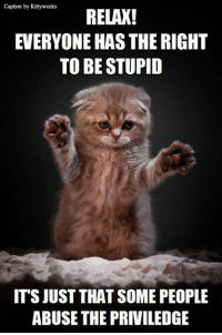 Anothr funny from Kittyworks: caption by Kittyworks  RELAX!  EVERYONE HAS THE RIGHT  TO BE STUPID  ITS JUST THAT SOME PEOPLE  ABUSE THE PRIVILEDGE Anothr funny from Kittyworks