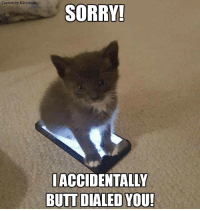 Sorry for calling you and not saying anything!  Sincerely, My Cat's Butt: Caption by Kittyworks  SORRY!  ACCIDENTALLY  BUTT DIALED YOU! Sorry for calling you and not saying anything!  Sincerely, My Cat's Butt