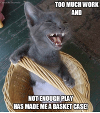 I think I'm cracking up!: Caption by Kittyworks  TOO MUCH WORK  AND  NOT ENOUGH PLAY  HAS MADE MEA BASKET CASE! I think I'm cracking up!