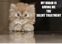 Enjoying the sounds of silence!: Caption by  MY BRAIN IS  GIVING ME  THE  SILENTTREATMENT Enjoying the sounds of silence!