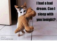 Had A Bad Dream: Captions By  ILoveFunnyCats me  I had a bad  dream. Can I  Sleep With  ou tonight?