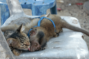 Captured these cuties in Koh Phi Phi, Thailand: Captured these cuties in Koh Phi Phi, Thailand
