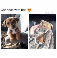 "Beef, Memes, and 🤖: Car rides with bae  Drsmashlove Ride with me, pupper. Ride with me. Let's face the open road together. Let's stop at Arby's and snack on processed roast beef-shaped meat product with extra BBQ sauce and curly fries. Let's hit gas station rest stops in small towns with that ""cappuccino"" machine that doesn't make cappuccinos but instead poops out an over-sweetened, frothy, milky coffee substance that ties your stomach in knots but low key taste good AF. Let me introduce u to my favorite records from Gucci Mane, 21 Savage, and maybe a lil Muddy Waters. Oooooh I surprised u with that last one, didn't I pupper ... see papa has diverse and eclectic musical tastes ☺️. Let me bust out a joint I rolled before the trip and blow this extremely good kush while we cruise at an altitude of 70 mph, pupper. Don't worry I'll roll down the windows and hit that sunroof, I can't imagine weed is good for puppies 😋. Pupper, I wanna cruise with you all the time. Will you be my lil ride or die homie on this journey of life? You complete me, pupper. You complete me 😍😂😂😂"