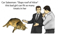 Bad, Cats, and Animal: Car Salesman: *Slaps roof of Alice*  this bad girl can fit so many  treats in her <p>My local animal shelter advertises their adoptable cats in the best way</p>