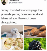 I miss Harambe too! https://t.co/rhxezfy3HN: Carina Mla  @CarinaPetrillo  Today I found a Facebook page that  photoshops dog faces into food and  let me tell you, I have not been  disappointed. I miss Harambe too! https://t.co/rhxezfy3HN