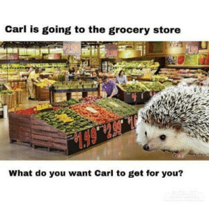 What do you guys want: Carl is going to the grocery store  199  .6514  What do you want Carl to get for you? What do you guys want