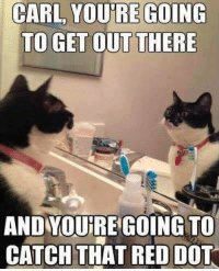 Cats, Memes, and Reds: CARL YOURRE GOING  TO GET OUT THERE  AND YOURRE GOING TO  CATCH THAT RED DOT This applies to any day I'd say. Via And My Cat