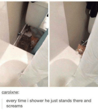 Memes, Shower, and Time: carolxne:  every time i shower he just stands there and  screams