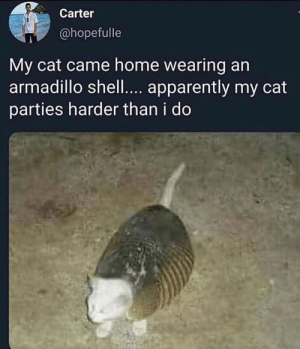 At least she goes to parties: Carter  @hopefulle  My cat came home wearing an  armadillo shell.... apparently my cat  parties harder than i do At least she goes to parties