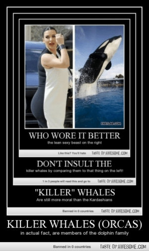 """Killer Whales (orcas)http://omg-humor.tumblr.com: CARTLAD.COM  WHO WORE IT BETTER  the lean sexy beast on the right  TASTE OFAWESOME.COM  Like thie? Youl hate  DON'T INSULT THE  killer whales by comparing them to that thing on the left!  TASTE OF AWESOME.COM  1 in 3 people will read this and go to  """"KILLER"""" WHALES  Are still more moral than the Kardashians  TASTE OFAWESOME.COM  Banned in 0 countries  KILLER WHALES (ORCAS)  in actual fact, are members of the dolphin family  TASTE OF AWESOME.COM  Banned in 0 countries Killer Whales (orcas)http://omg-humor.tumblr.com"""