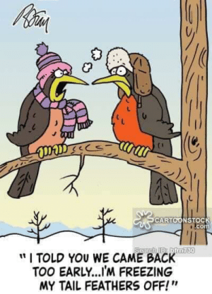 "Im Freezing: CARTOONSTOC  com  "" I TOLD YOU WE CAME BACKTO  TOO EARLY...IM FREEZING  MY TAIL FEATHERS OFF!""  90"