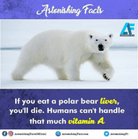 Memes, 🤖, and Liver: cAs tonishing facts  If you eat a polar bear liver,  you'll die. Humans can't handle  that much vitamin A  f 9 AstonishingFactsofficial Astonishing Fact.com  Astonishing Ft Did you know? rvcjinsta